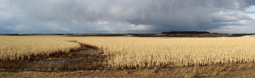 Threatning Skies Over North Dakota Corn Field